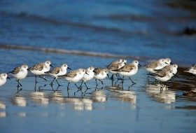 Beach Bum Birds: Coastal Fliers and Beach Birding Locations