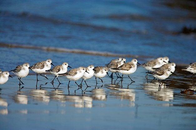 Beach Birds Coastal Fliers And Birding Locations Blooms