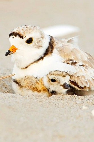 Beach Bum Birds: Coastal Fliers and Beach Birding Locations | Birds & Blooms