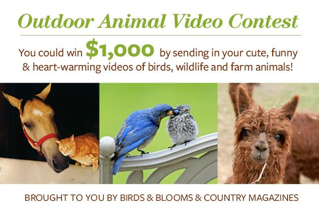 Outdoor Animal Video Contest