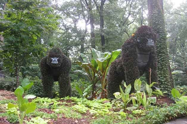 These huge gorillas were very impressive!