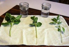 How To Take Herb Cuttings