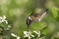 3 Tips for Feeding Hummingbirds this Autumn