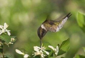 Hummingbirds Have Returned to the Gulf Coast