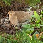 Late Nesting Birds: When Do Birds Lay Eggs?