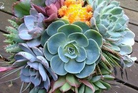 Drought Tolerant Succulent Superstars