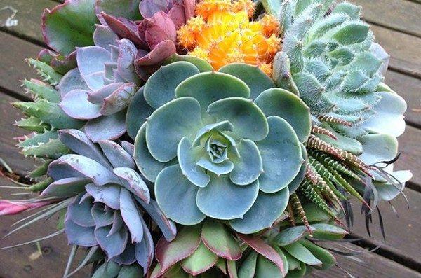 Drought Tolerant Succulents