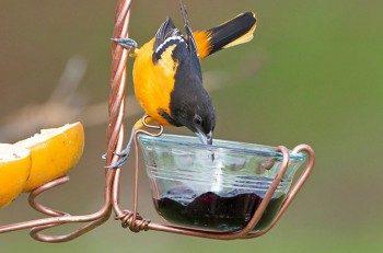 Feeding Birds: