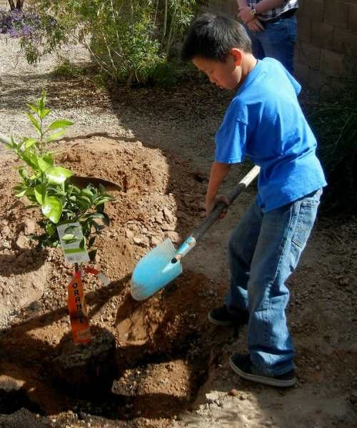 Correct planting hole