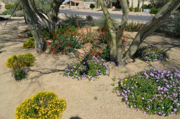 Southwest Butterfly Garden