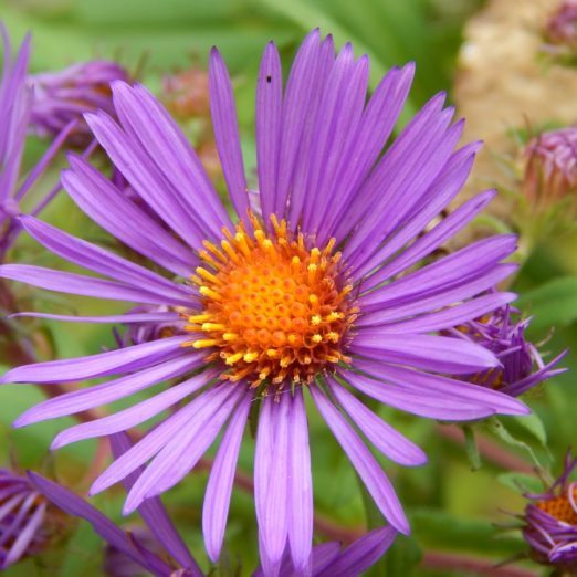 Keep Growing: Fall is the Perfect Time to Plant Perennials