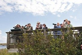 Fall Birding Locations on the East Coast