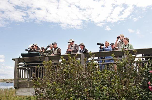 Fall Birding Locations on the East Coast