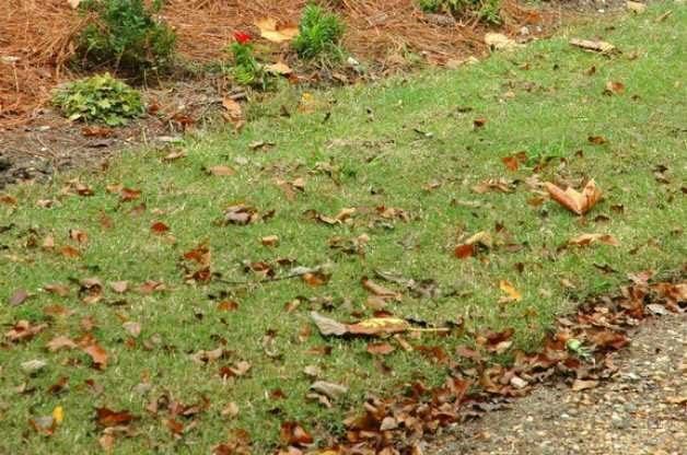 fall leaves as organic matter