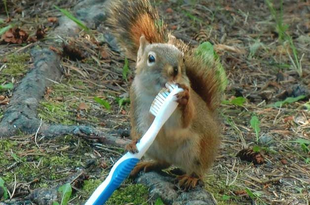 Friday Funny Photography: Brushing Squirrel