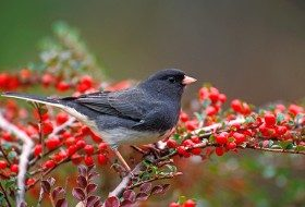 Attracting Birds and Wildlife in Extreme Weather