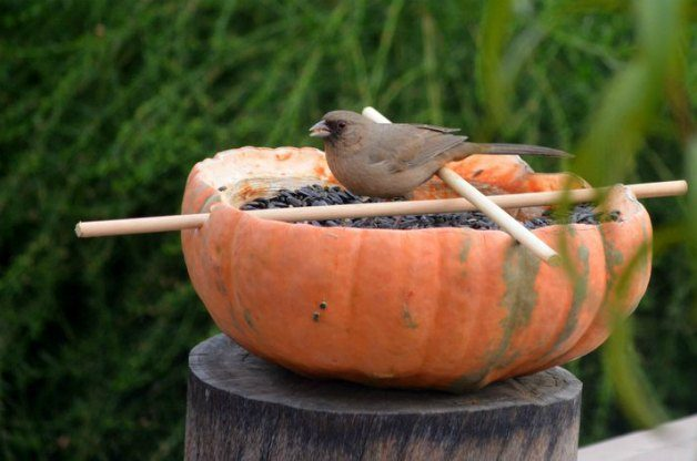 DIY Pumpkin Bird Feeder 4