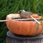 Backyard Project: DIY Pumpkin Bird Feeders
