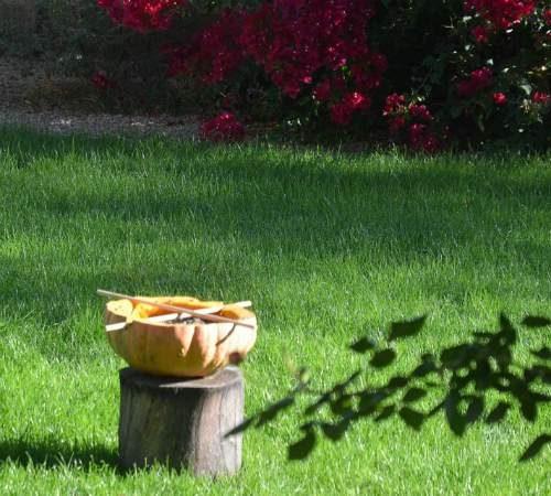 DIY Pumpkin Bird Feeder 5