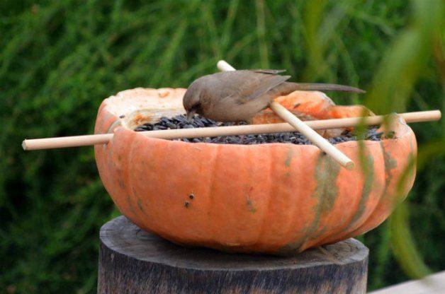 DIY Pumpkin Bird Feeder 6