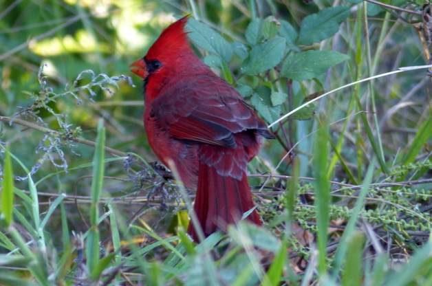 Ding Darling Birding Hotspot