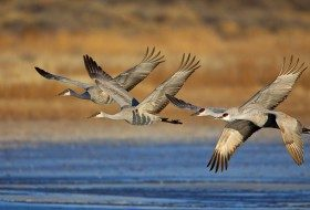 Change Is In The Air: Bird Migration Patterns