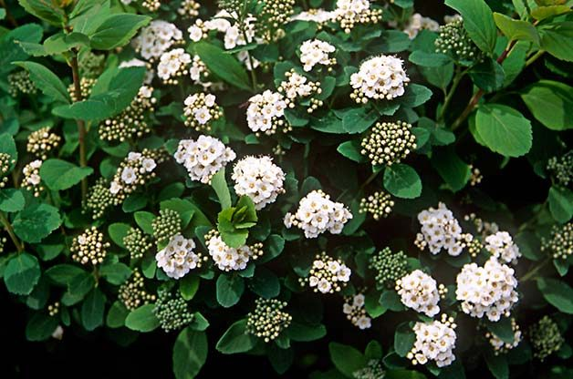 Top 10 Shrubs For Your Small Space Garden