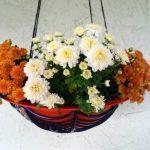 Make a DIY Spiderweb Halloween Planter