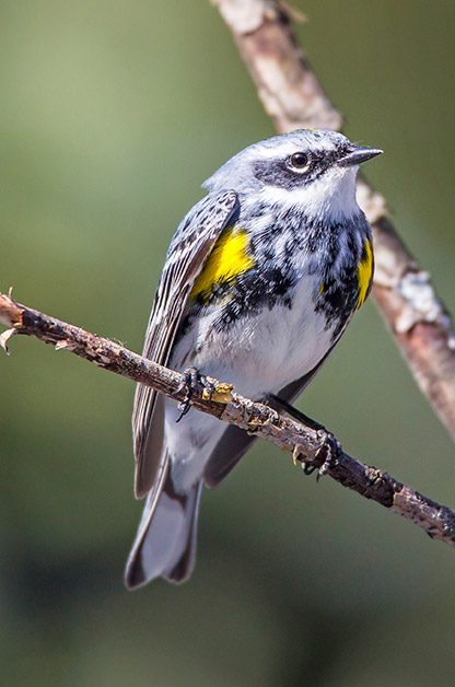 The Ultimate Guide To Backyard Bird Photography