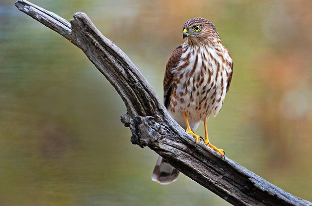 Hawk Watching During Raptor Migration