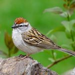 The Most Common Birds Found in North America