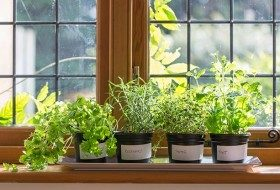 Basics of Windowsill Gardening