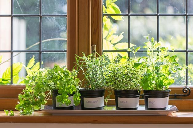 Basics of Gardening in Winter: Windowsill Gardening