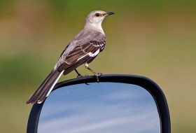 See the Best Birding Sites…From Your Car