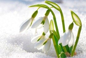 Top 10 Winter Bloomers For Your Flower Garden