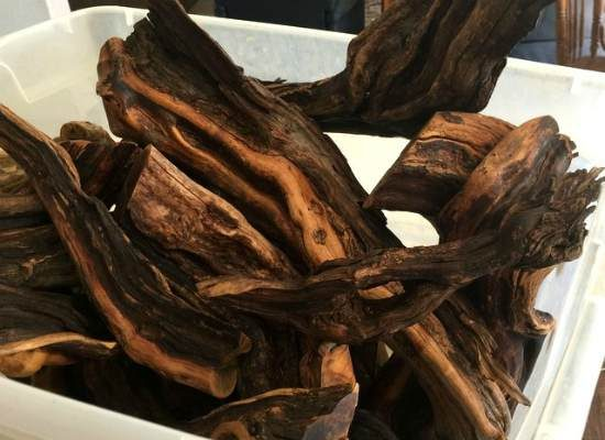 Old, woody roots from a desert shrub.