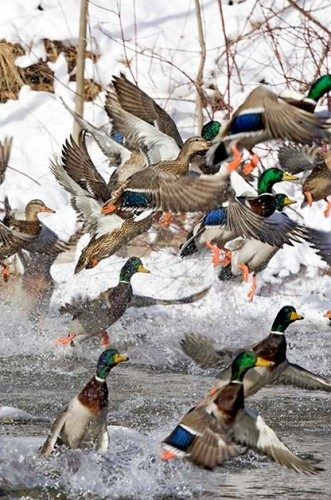 The Most Common Birds Of North America