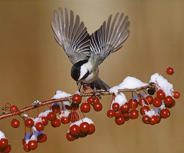 2014 Photo Contest Winner! - Birds and Blooms