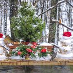 7 Fun Facts About Christmas Trees