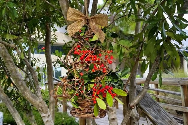 Christmas Tree DIY Bird Feeder