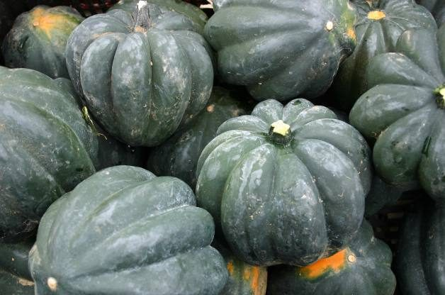 Fall Vegetables Squash