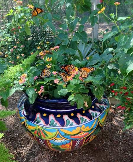 Gift Ideas for Container Gardening - Birds and Blooms