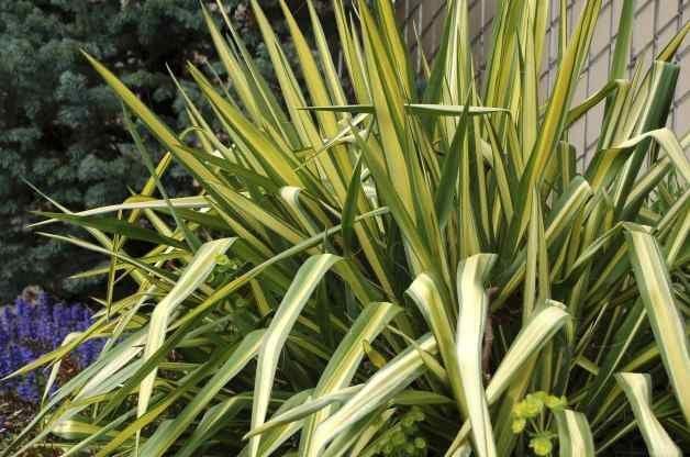 Heat Tolerant Plants Yucca Terra Nova Nurseries