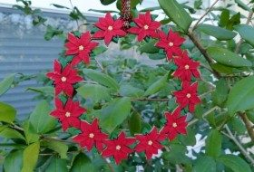 Poinsettia Button Wreath Ornament