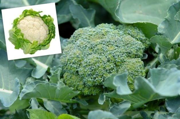 Spring Vegetables Broccoli Cauliflower