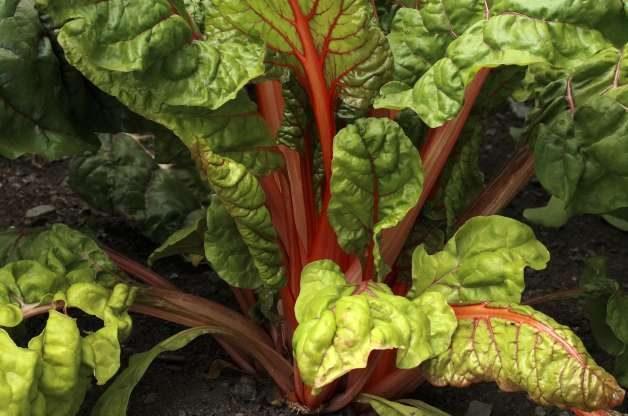 Spring Vegetables Greens