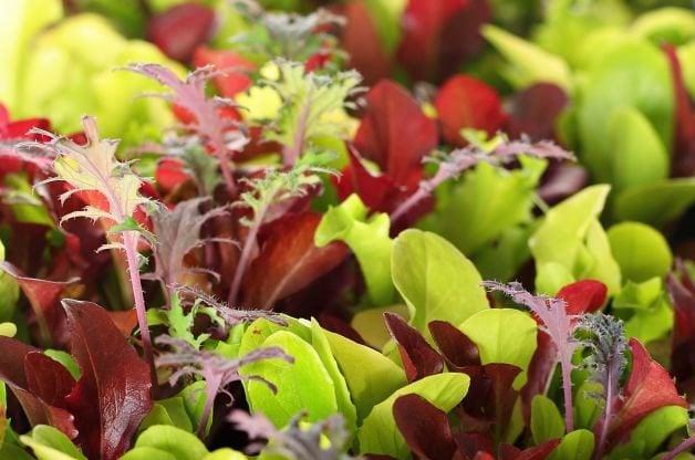 Spring Vegetables