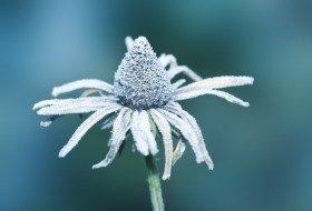Winter Plants Coneflower