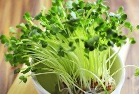 DIY Vegetable Garden Idea: Mini-Me Microgreens