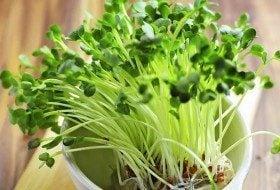 DIY Vegetable Garden Idea: Mini-Me Microgreens